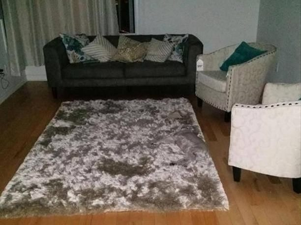 19張狗狗不小心和地毯「撞色」的考驗眼力爆笑汪星人照