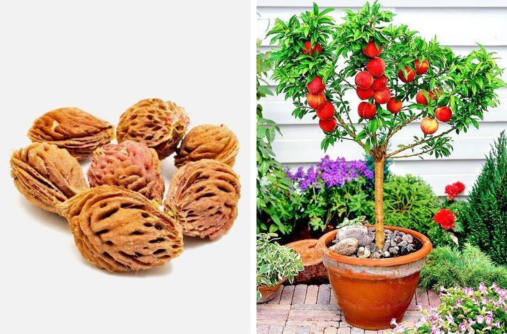 要吃自己種!8種「讓你在家也有吃不完」的種水果大法