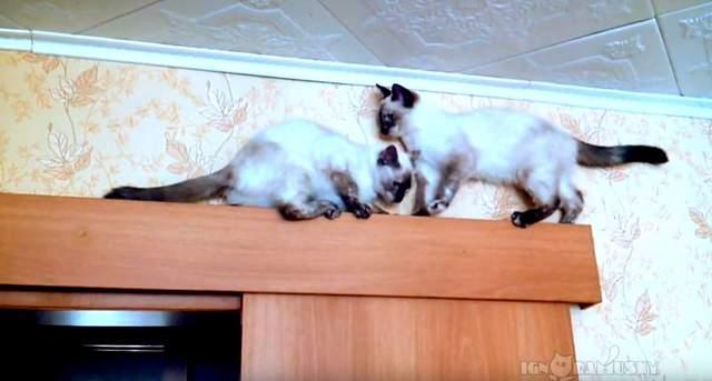 2隻貓卡在單行道上進退兩難 「超爆笑會車法」網笑翻!