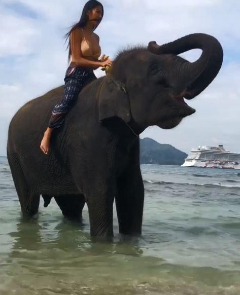 大象玩水玩得好開心,結果網友一看到照片直呼:「看過的人現在比大象更開心了~」