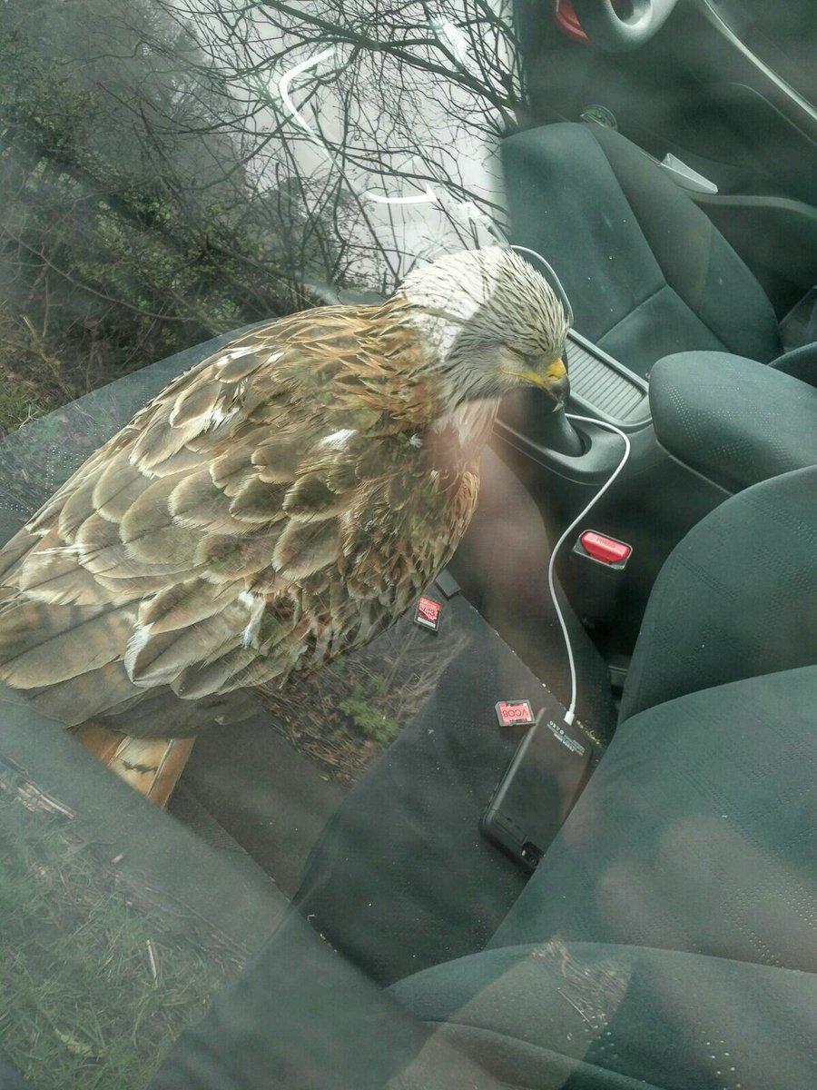 帥哥路過出手暖救昏迷鳥 「鳥一醒來」他立馬後悔了