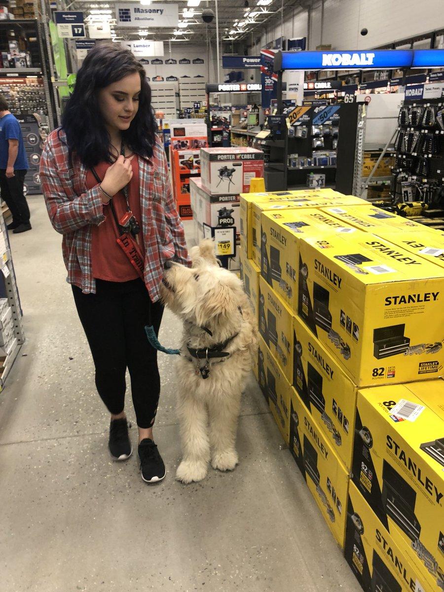導盲犬偷偷帶主人進店裡以為沒被發現 「超心機計謀」網全笑翻