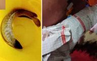 他手術前2天「6年白龍魚」翻肚暴斃 風水魚擋煞拿命報恩