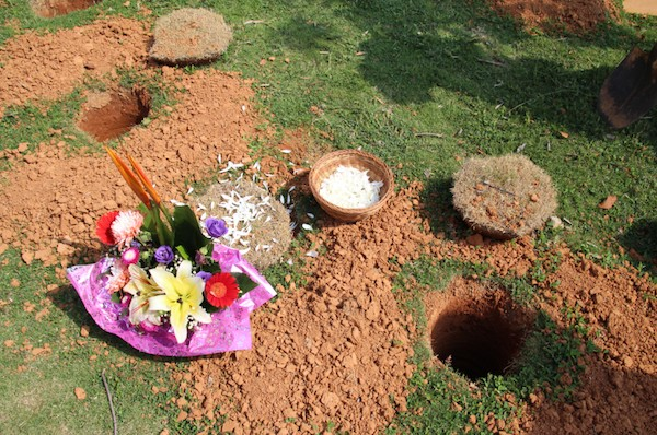 塵歸塵、土歸土!台灣環保「樹葬」人數暴增6成 高雄計劃增800樹穴