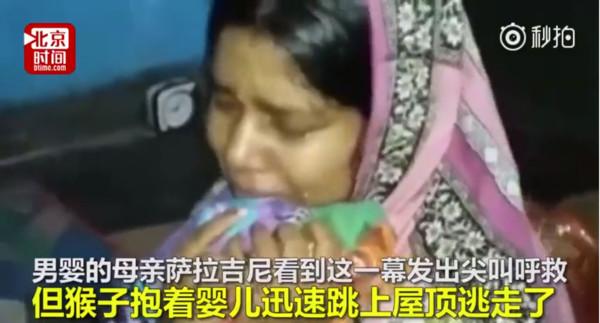16天大男嬰被野猴子「抱走玩弄」,最後媽媽找到時「已經變成井底棄屍」