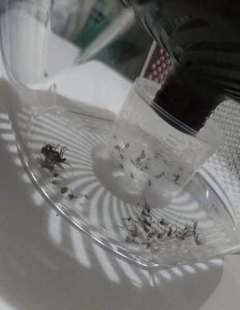 蚊子爆多怎辦?網友分享「最強DIY誘餌法」,只要5天就能「疊滿一座蚊屍山」!網驚:超有效