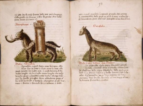 800年前動物「長這樣」 鱷魚模樣太獵奇 (25張)