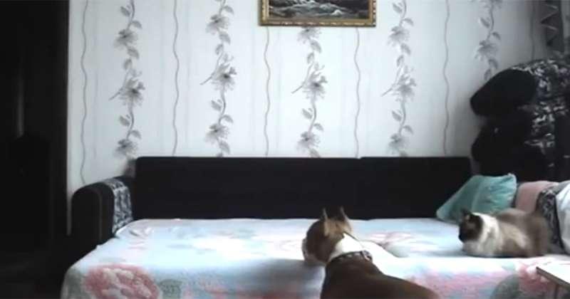狗狗不被允許到床上玩 結果主人一出門...畫面太好笑!