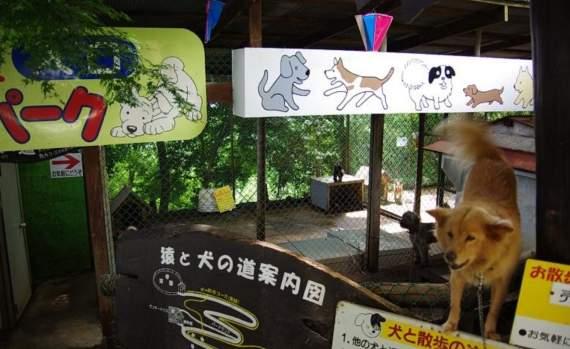 動物都是收養來的,連員工也是!最荒涼動物園「每年慘賠500萬」園長仍繼續收養:不能放棄任何一個!