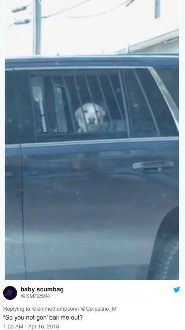狗狗攻擊鹿被捕 「警車上一臉茫然」主人笑到忘記要救他