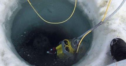 科學家拍攝冰層下「南極海底世界」罕見畫面 根本就像外星世界啊~
