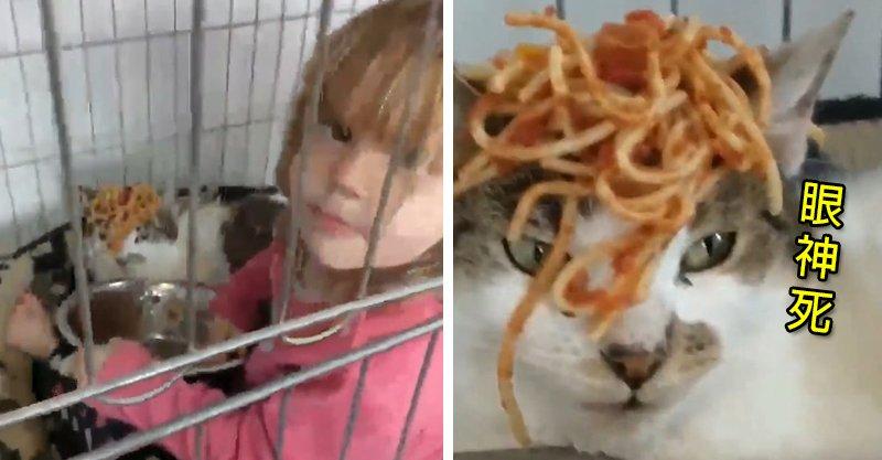 小女孩帶義大利麵找貓玩 「加冕儀式」主子眼神死:朕要打113