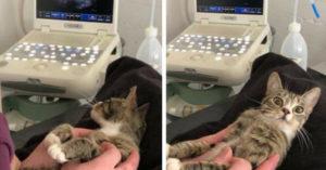 小母貓超音波一照發現即將當媽 驚訝到圓滾滾雙眼睜超大:什麼?你再說一次!