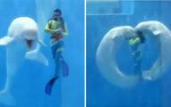 超靈性小白鯨「點頭又親親」 擺出大愛心給最愛的人類