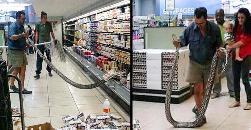 28個「發生機率有夠低」的怪事 超市裡出現「4公尺大蛇」誇張到不行!