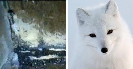 媽媽夢中遇「狐仙」索命寶寶 走進嬰兒房氣氛一陣冰冷:他被帶走了