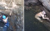 小狗兒跌落水井「狂游好多天」 見救援隊眼睛發亮:快把網子丟下來啊~