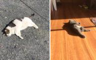 只能看不能摸唷!落「貓」歸根的季節 滿地軟呼呼烤麻糬❤