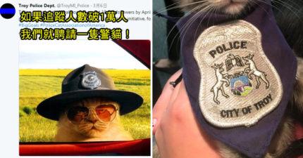 警局許願「粉絲破萬就聘警貓」8天達標 療癒系喵長官上任囉!