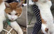 貓咪偷溜被發現 露出「史上最絕望醜臉」:本喵不想回家啊!