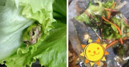 日本便當驚現「青蛙」!網友:代表很健康