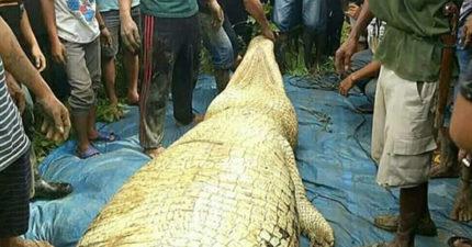 印男失蹤2天 警方打開「6公尺鱷魚肚子」真相讓人反思