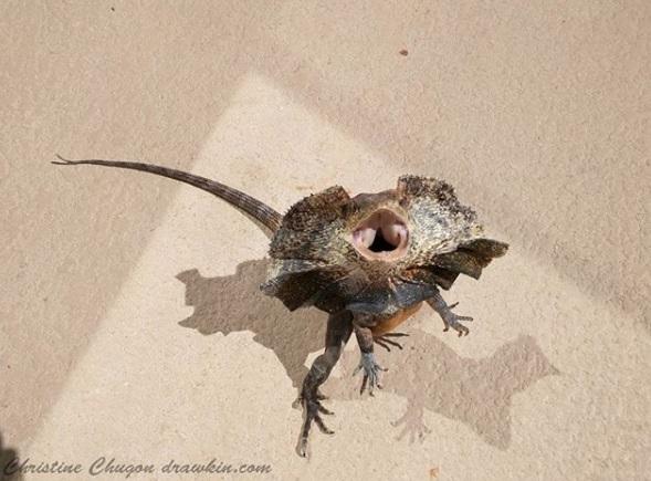 巧遇前女友...傘蜥蜴「站立拔腿飛奔」網笑噴:我也是這樣