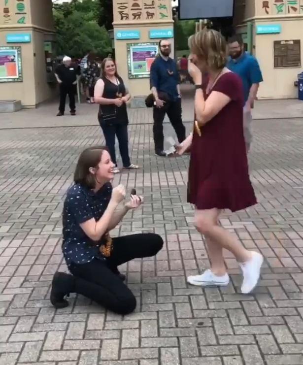 原本計畫到動物園約會 短髮正妹女同伴侶「下跪求別離開我了」全場感動噴淚