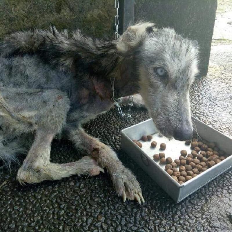 狗狗被遺棄狀態超悽慘 他暖心拯救「復原模樣」太驚艷!