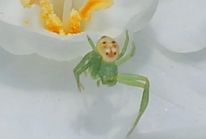 蜘蛛身上揹老爺爺的臉 意外撞臉「他」網笑:突然不怕了