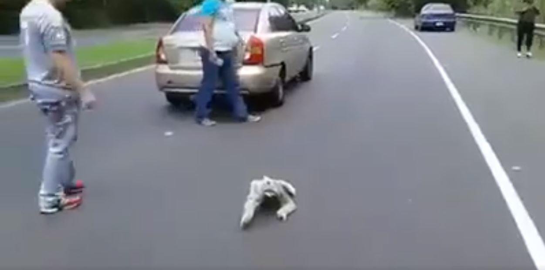 樹懶哥過馬路意外造成「超級大塞車」 好心人幫忙抱起...牠下秒卻做出「超奇葩動作」笑翻全網!