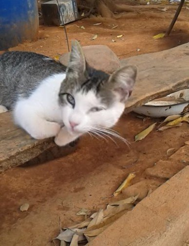 確認一下癱軟浪浪還活著 貓咪被吵醒眼神死:愚蠢的人類,有何貴幹!