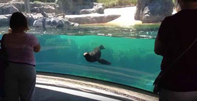 與暖男海獅追逐 女孩跌到海獅秒停住關心「妳還好嗎?」