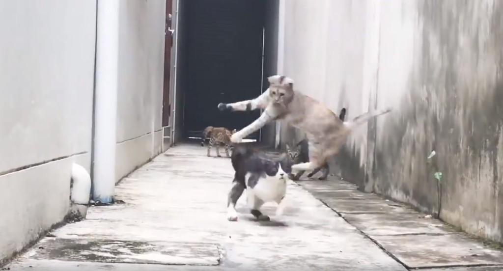 I believe I can fly~傻貓被嚇到各種起飛 網笑瘋重播6000萬次