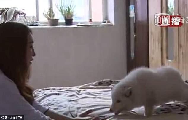 3月大狗狗突然變臉拒吃飼料 尾巴關鍵識破「真面目」