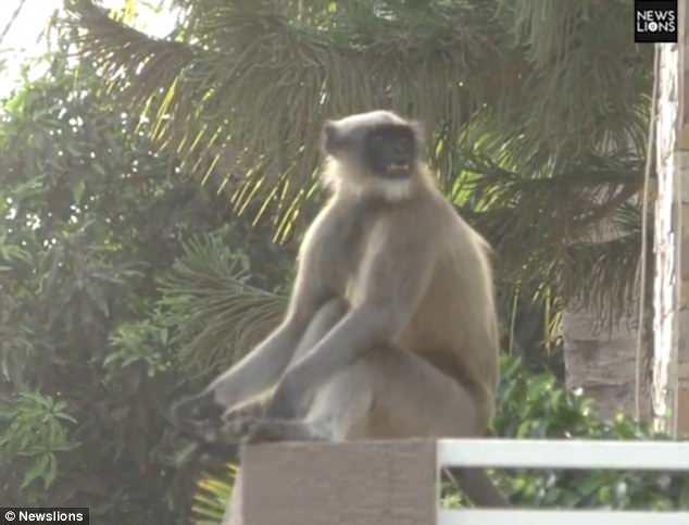 猴球崛起!村莊慘遭猴子統治  人類完全無力反抗!