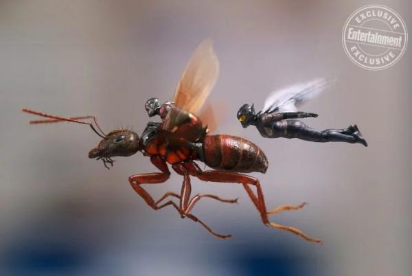 蟻人與黃蜂女有在《復仇者3》現身嗎?洛基可愛吐槽萌翻!