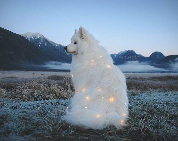 30張證明「薩摩耶是最謎樣生物」的爆笑萌照!一遇水北極熊上身