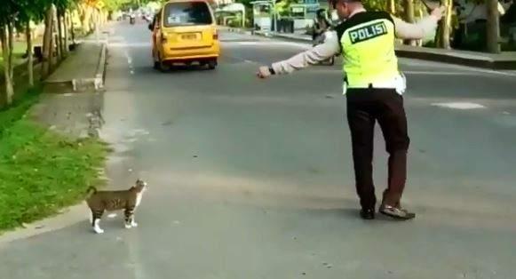 喵皇要過馬路 暖警「肉身護駕開路」:皇上請過!