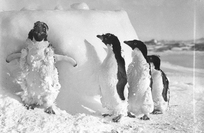 一百年前澳洲首支「南极敢死队」图集 逼近死亡才能见证的美 -5afd4968d78b8
