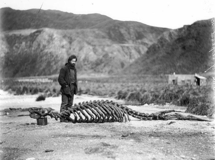 一百年前澳洲首支「南极敢死队」图集 逼近死亡才能见证的美 -5afd4969da6ca