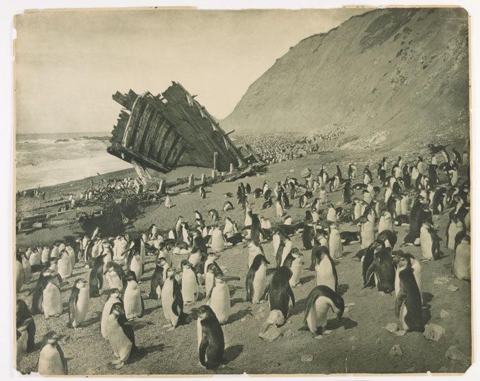 一百年前澳洲首支「南极敢死队」图集 逼近死亡才能见证的美 -5afd496b6081c