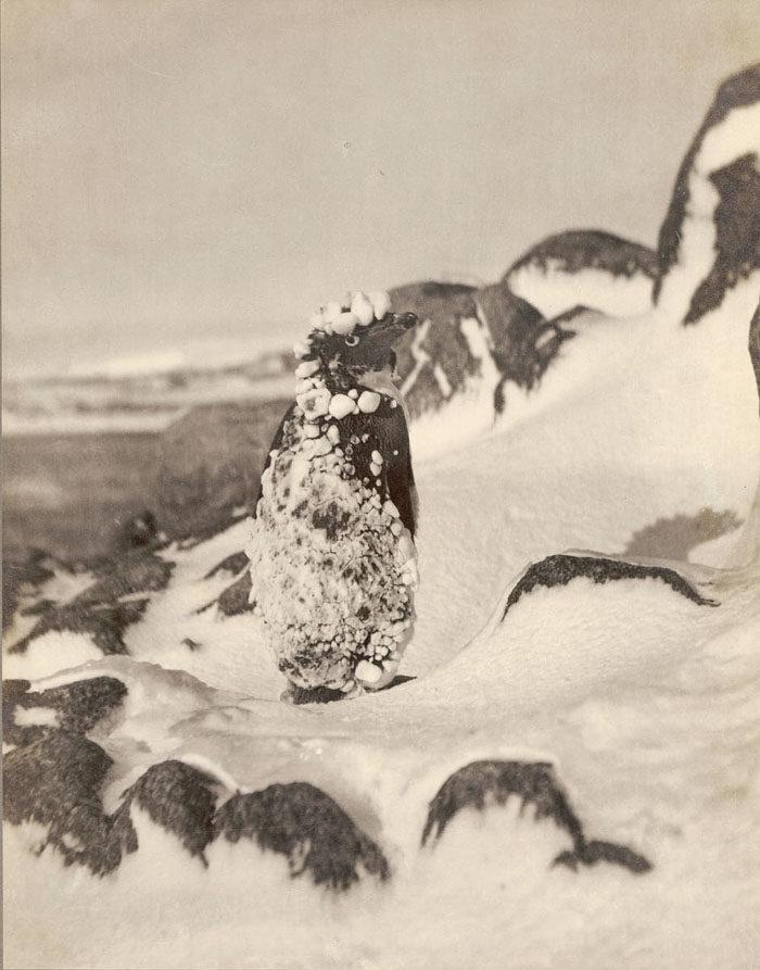一百年前澳洲首支「南极敢死队」图集 逼近死亡才能见证的美 -5afd496c1a8b9
