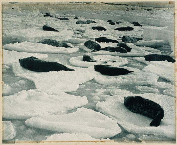 一百年前澳洲首支「南极敢死队」图集 逼近死亡才能见证的美 -5afd496d0291b