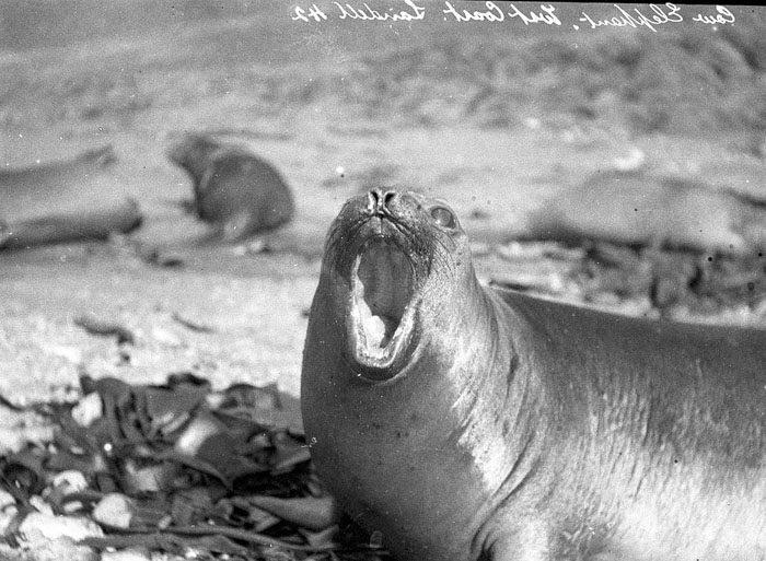 一百年前澳洲首支「南极敢死队」图集 逼近死亡才能见证的美 -5afd496ec1dad
