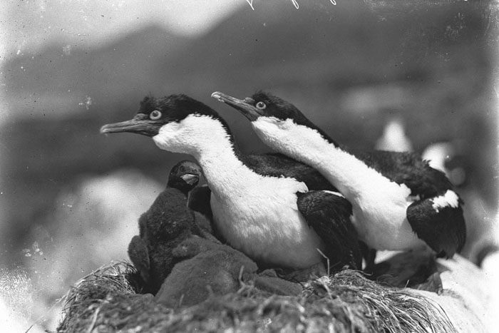 一百年前澳洲首支「南极敢死队」图集 逼近死亡才能见证的美 -5afd49715a3a8
