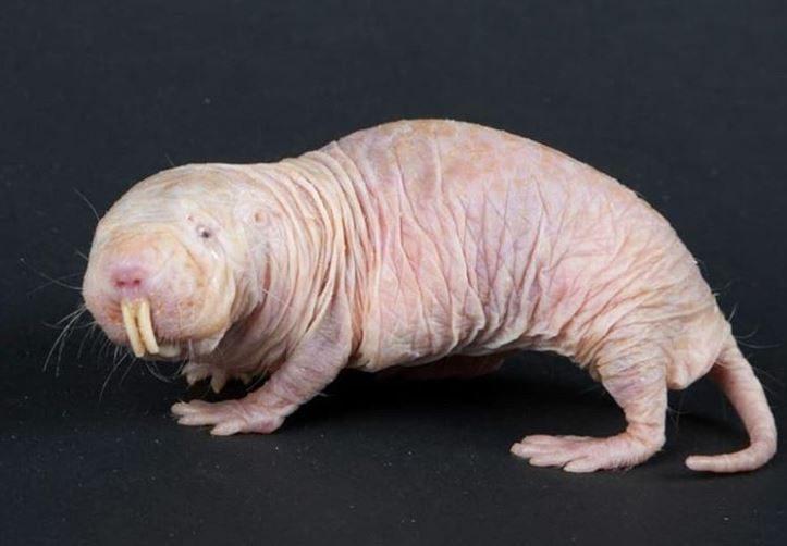 17隻「基因被上帝偷偷改造」稀有物種 朝天眼魚給你最溫暖的注目