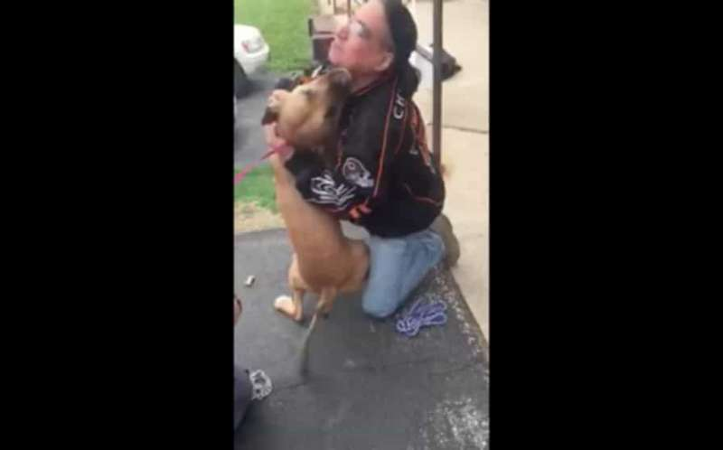 狗狗和主人分離2年不敢靠近 下秒「終於認出來」讓網噴淚