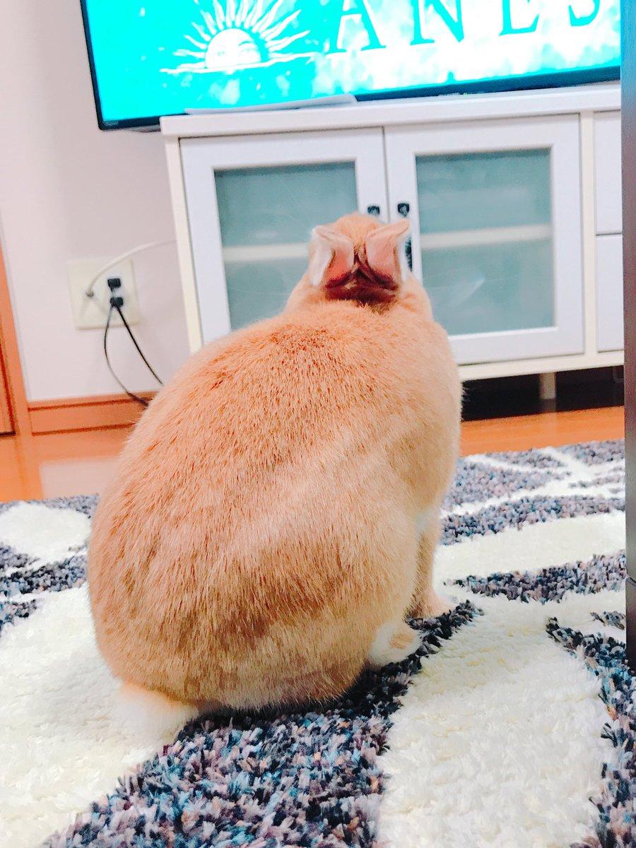主人只顧著打電動!兔兔氣到翻肚肚「佔領鍵盤」!