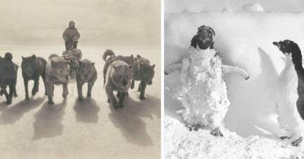 一百年前澳洲首支「南極敢死隊」圖集 逼近死亡才能見證的美